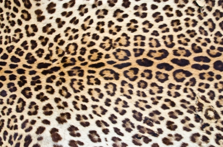 Real leopard hair for  background use photo