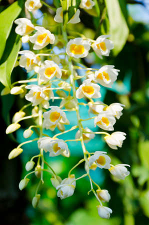 Little orchid blossom in nature Stock Photo - 19458098