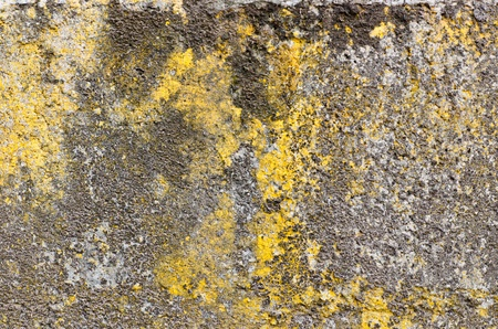 Old rough yellow wall photo