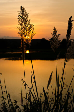 Sunset with nature tall grass photo