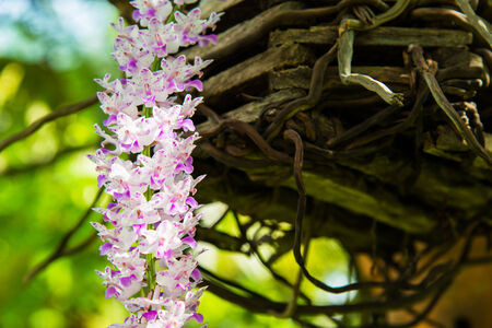 Closeup little violet blossom orchid