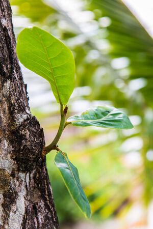 Closeup new green leaves