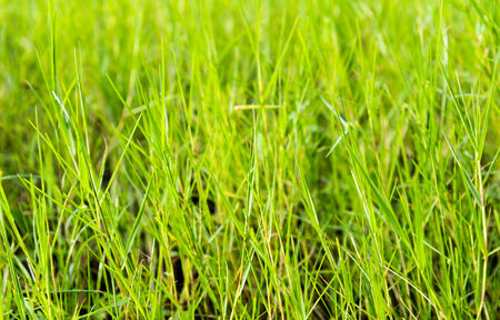 Closeup lawn green grass Stock Photo