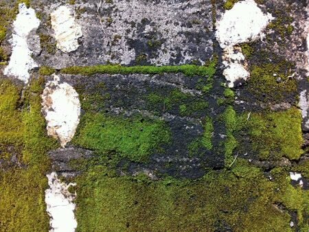 Closeup image of old mossy wall