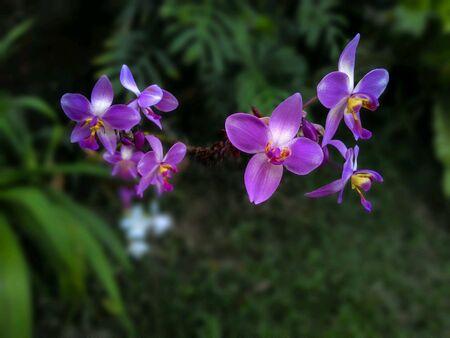 Closeup blossom violet flowers Stock Photo