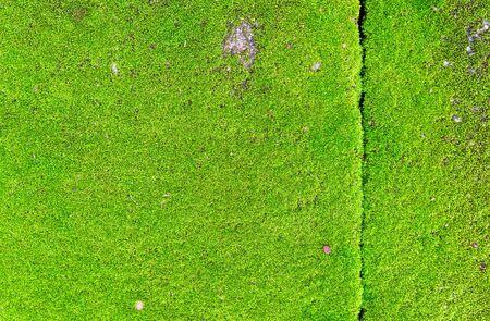 Closeup green moss on the wall