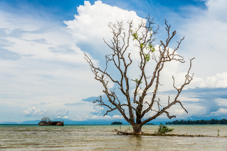 Image of ruin fishing boat and old big tree in Thailand Stock Photo