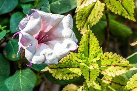 Closeup violet blossom flower in garden