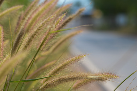 The grass along the side of the road