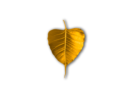 loudness: The leaves of the Bodhi tree symbolize Buddhism.