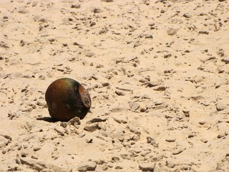lonelyness: Coconut rotten and burned by the sun lying in the sand of a beach of brasielra.