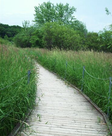 boardwalk trail: Boardwalk Through The Wetland