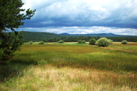Field Outside Of Bend Oregon Reklamní fotografie