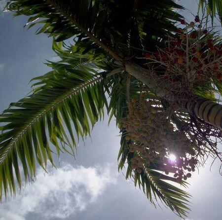 canopy: Palm Tree Canopy
