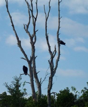 everglades: Birds In The Everglades