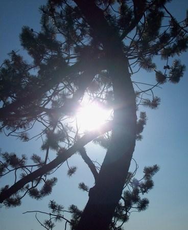bending: Tree Bending Around The Sun Stock Photo