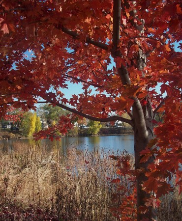 shorelines: Red Leaves On Tree By Lake Como Stock Photo
