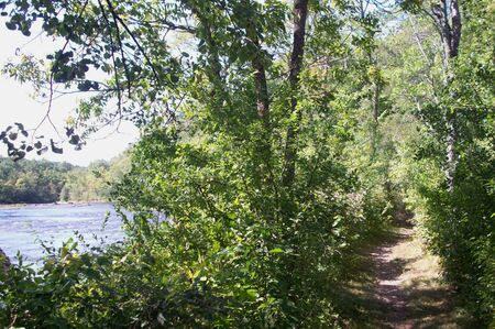 minnesota woods: Path In Forest Along The River Stock Photo