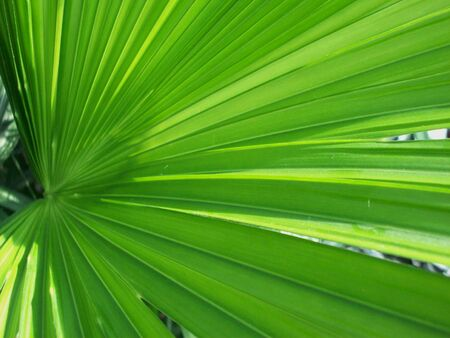 frond: Palm Frond Stock Photo