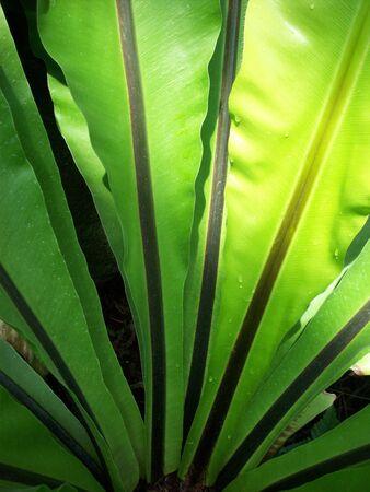 Varenvarenbladen Stockfoto
