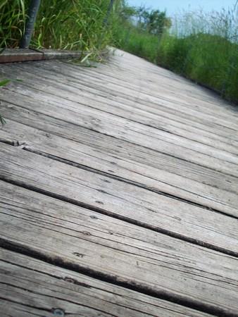 boardwalk trail: Boardwalk Through The Wetland