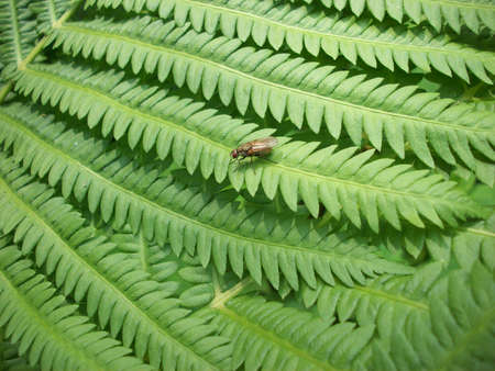frond: Fly On Fern Frond