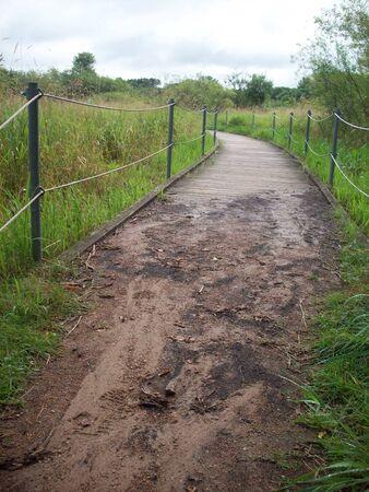 wetland: Boardwalk Through The Wetland