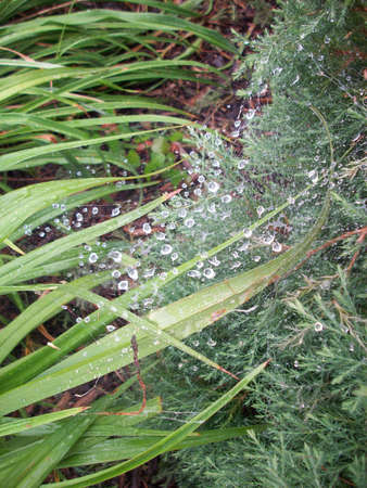 Spider Web Reklamní fotografie