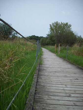 boardwalk trail: Boardwalk Through Wetland Stock Photo