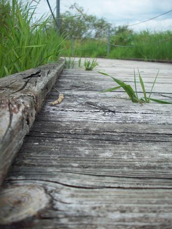 Boardwalk Through Wetland Stock fotó - 44008891