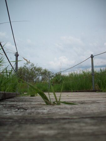 Boardwalk Through Wetland Imagens