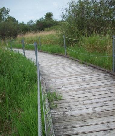 wetland: Boardwalk Through Wetland Stock Photo