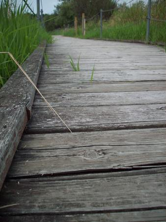 Boardwalk Through Wetland Фото со стока
