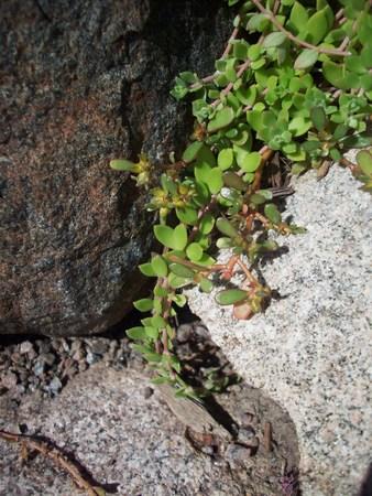 Green Growth Stock Photo - 46082264