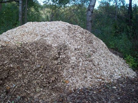 wood chip: Wood Chip Pile Stock Photo