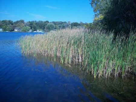 shorelines: Lake Shoreline