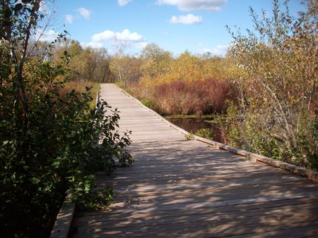 boardwalk trail: Boardwalk
