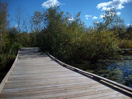 boardwalk trail: Boardwalk