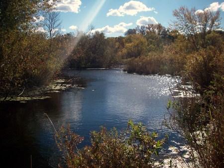 boardwalk trail: Wetland Landscape