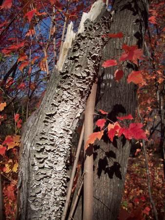 fungi: Fungi on Tree