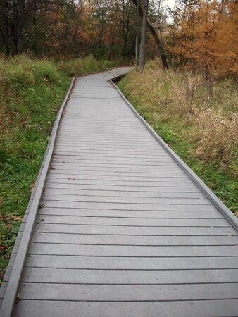 boardwalk trail: Boardwalk in the Woods