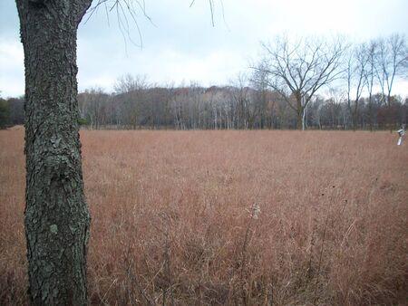 minnesota: Open Field in Minnesota