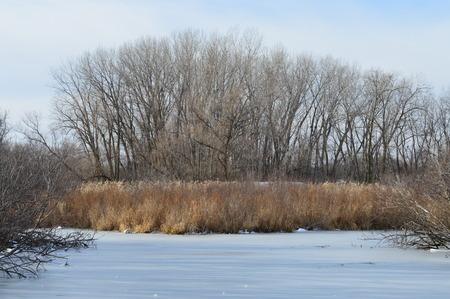 wetland: Frozen Wetland Stock Photo