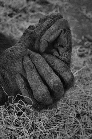 grasp: Orangutan Hands
