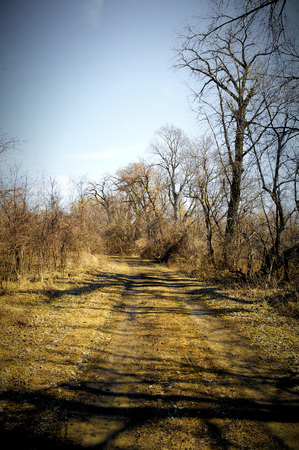 minnesota woods: Trail in the Woods