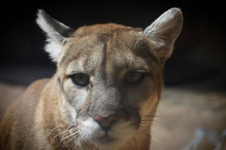 prowl: Mountain Lion