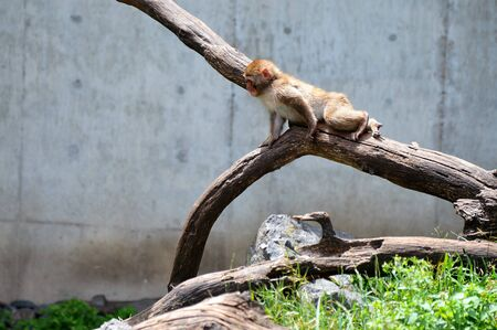 Monkey neve Archivio Fotografico - 61834365