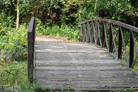 Bridge Imagens - 66899654