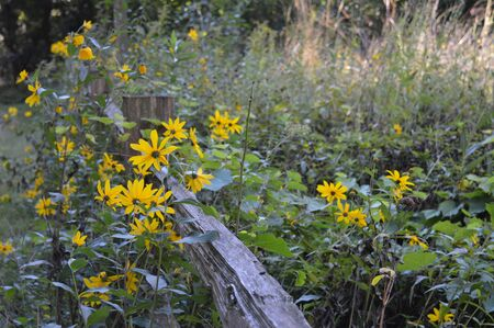 site: Prairie Site