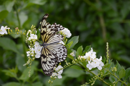Butterfly close up. Stock Photo